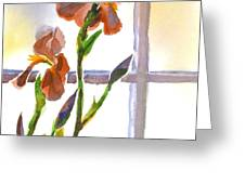 Irises in the Window Greeting Card by Kip DeVore