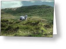 Irish Countryside Greeting Card by Kandy Hurley