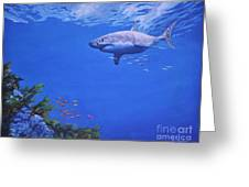Pacific Great White Greeting Card by Noe Peralez