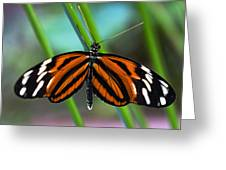 Ismenius Tiger Butterfly Greeting Card by Cheryl Cencich