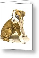 Isolated Boxer Puppy Greeting Card by Tony Moran