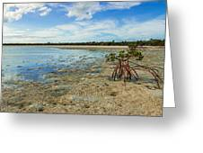 Isolated Greeting Card by Chad Dutson