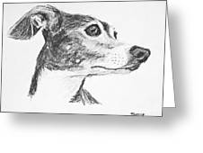 Italian Greyhound Sketch In Profile Greeting Card by Kate Sumners