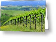 Italian Vineyard Greeting Card by Ramona Johnston