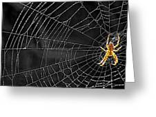 Itsy Bitsy Spider My Ass 3 Greeting Card by Steve Harrington