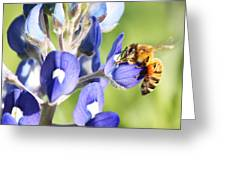I've Got A Bee In My Bluebonnet Greeting Card by Lorri Crossno