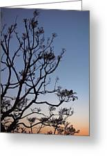 Jacaranda Sunset Greeting Card by Rona Black