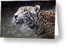 Jaguar Sticking Out Tongue Greeting Card by Shoal Hollingsworth