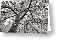 January Forest Greeting Card by Ari Salmela