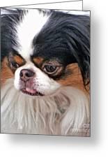 Japanese Chin Dog Portrait Greeting Card by Jim Fitzpatrick