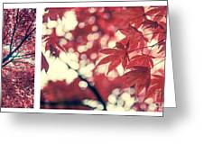 Japanese Maple Collage Greeting Card by Hannes Cmarits
