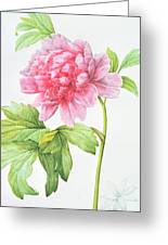 Japanese Tree Peony Greeting Card by Pierre Joseph Redoute