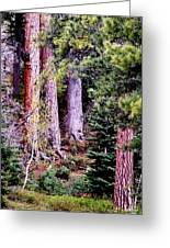 Jeffrey Pine Greeting Card by Deborah Moen