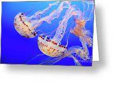 Jellyfish 9 Greeting Card by Bob Christopher