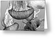 Jellyfish Floating By Greeting Card by Artist and Photographer Laura Wrede