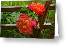 Joseph's Coat On The Fence Greeting Card by Ronda Broatch