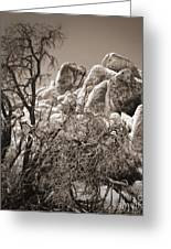 Joshua Tree - 07 Greeting Card by Gregory Dyer