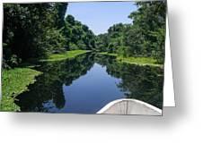 Journey Into A Green Paradise Of Mangroves Cuero Y Salado Wildlife Preserve La Ceiba Honduras Greeting Card by Robert Ford