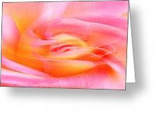 Joy - Rose Greeting Card by Ben and Raisa Gertsberg