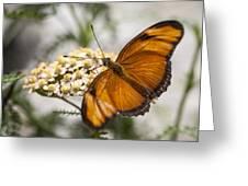 Julia Butterfly Greeting Card by Adam Romanowicz