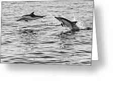 Jump For Joy - Common Dolphins Leaping. Greeting Card by Jamie Pham