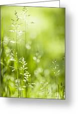 June Green Grass  Greeting Card by Elena Elisseeva