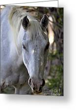 Just A Horse Greeting Card by Juls Adams