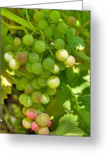 Just A Little More Time On The Vine Greeting Card by Heidi Smith
