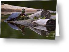 Just Chillin.. Greeting Card by Nina Stavlund