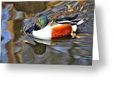Just Ducky Greeting Card by Marty Koch