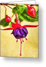 Just Hanging Around Greeting Card by Peggy J Hughes