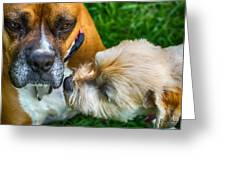 Just One Little Smooch Greeting Card by Barry Jones