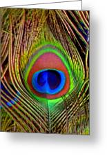 Just One Tail Feather Greeting Card by Angelina Vick