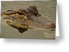Juvenile Alligator Greeting Card by Lynda Dawson-Youngclaus
