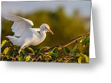 Juvenile Cattle Egret Greeting Card by Andres Leon