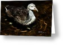 Juvenile Coot 9042 - F Greeting Card by James Ahn