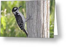 Juvenile Hairy Woodpecker Greeting Card by Linda Freshwaters Arndt