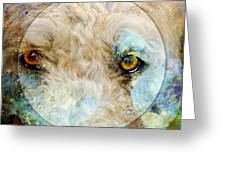 Kaliedoscope Eyes Greeting Card by Judy Wood
