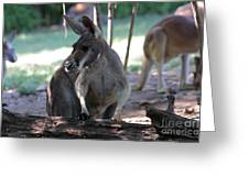 Kangaroo-2 Greeting Card by Gary Gingrich Galleries