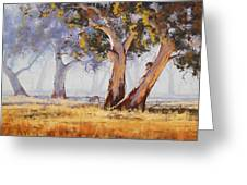 Kangaroo Grazing Greeting Card by Graham Gercken
