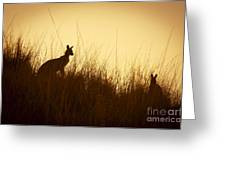 Kangaroo Silhouettes Greeting Card by Tim Hester