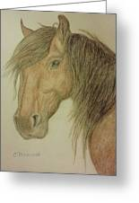 Kathy's Horse Greeting Card by Christy Brammer