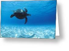 Keiki Turtle Greeting Card by Sean Davey