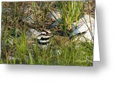 Killdeer Greeting Card by Linda Freshwaters Arndt
