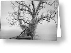 Killer Tree - Outer Banks Greeting Card by Dan Carmichael