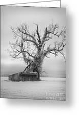 Killer Tree - Outer Banks Greeting Card by Dan Carmichael