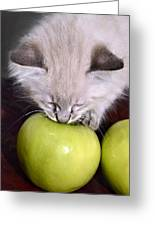 Kitten And An Apple Greeting Card by Susan Leggett