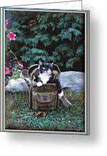 Kitten In A Canvas Bag Greeting Card by Patricia Keller