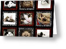 Kitty Cat Tic Tac Toe Greeting Card by Andee Design