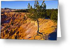 Know Your Roots - Bryce Canyon Greeting Card by Jon Berghoff